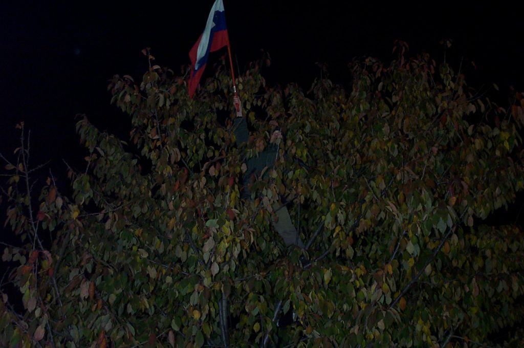 Supporter in a tree